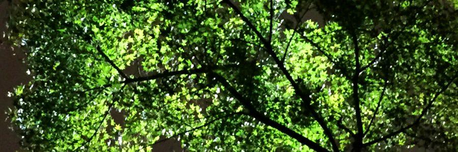 八芳園 庭園照明改修プロジェクト